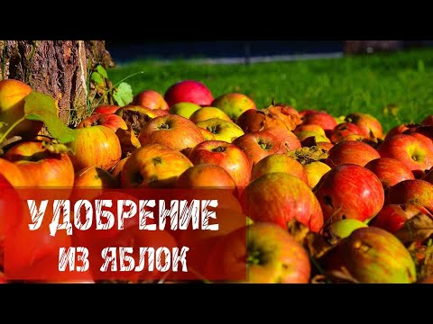Удобрение из яблок.