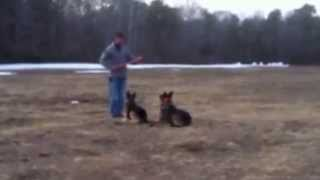 Off Leash Control And Obedience