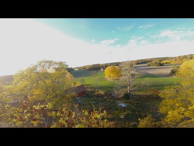 Dungen - Last Autumn Flight  | Fpv Freestyle