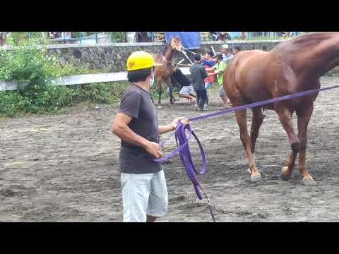 Kawin Kuda Pecah Perawan