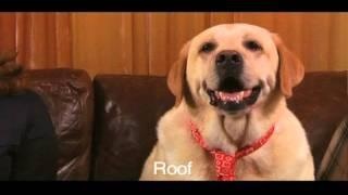 Funny Talking Dog Commercial - Foldflops