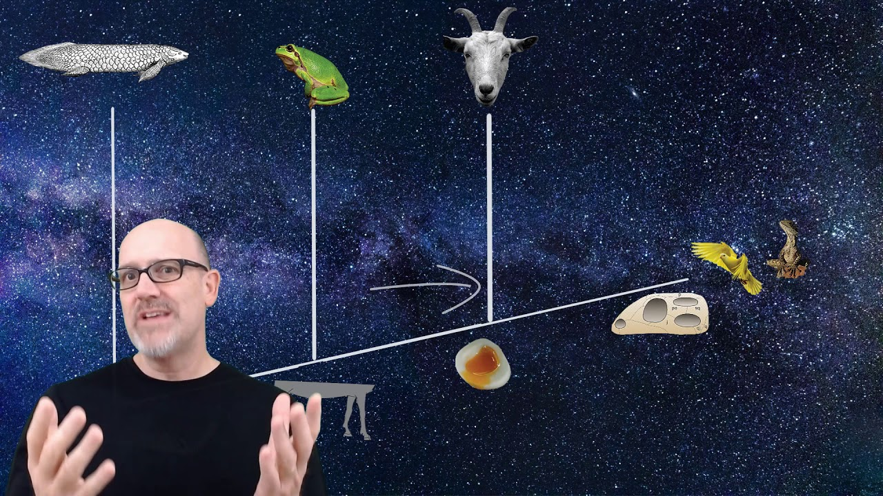 Phylogenetics and Cladograms: How useful are cladograms to creationists?