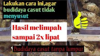 Cara Agar Hasil Cacing Sutra Melimpah Dalam Budidaya Casut Tanpa Lumpur-herdi Susanto