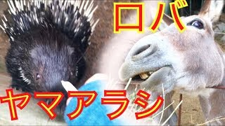 岡山県 渋川動物公園 なんだロバ…お前らそんなにカオスな 顔ができたの...