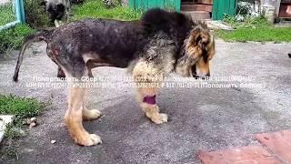 Никто не верил что собака выживет кроме тех кто помогал лечить shelter for animals