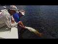 Big Snook Fishing 10 Cent Bridge with DOA Baitbuster Lure