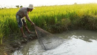 Nice Cast Net Fishing 2020 - Catch A lot Fish In Small Pond In Rice Field By Cast Net Fishing