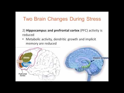 Chronic Stress, Cortical Plasticity and Neuroecology