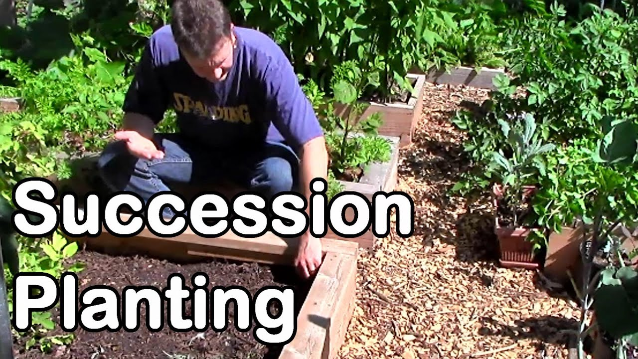 succession planting for a continuous harvest into the fall and