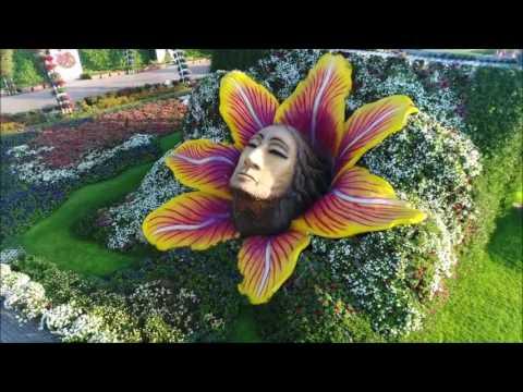 Dubai Miracle Garden  حديقة دبي المعجزة – أجمل اخراج