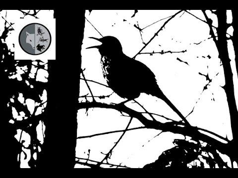 1000 sons différents - Semaine no.12 - Films Nature Web TV