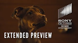 A DOG'S WAY HOME: Extended Preview - Now on Digital! On Blu-ray 4/9