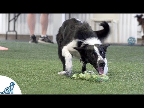 Dog Agility Training In SLOW MOTION 2018