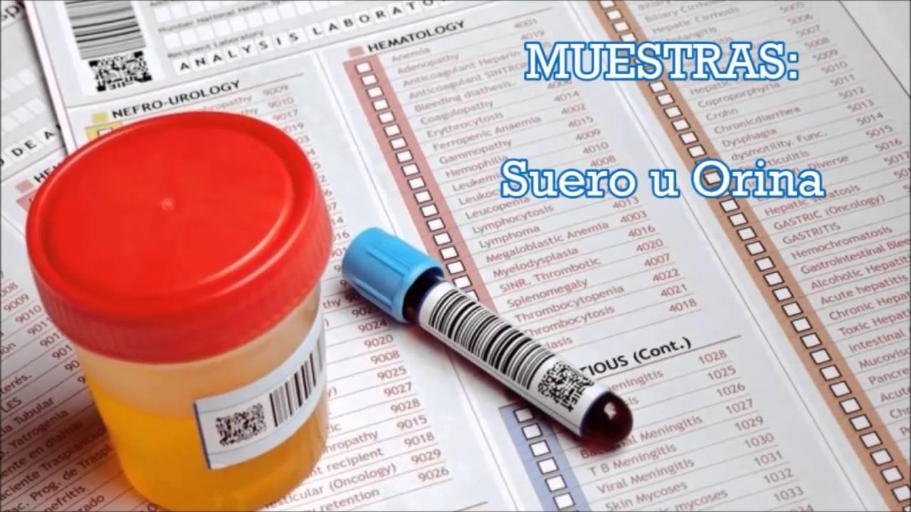como se forma el acido urico en los insectos metabolismo de las purinas y acido urico nivel normal de acido urico serico