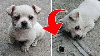 Köpek Yavrusu Bu Rögar Kapağından Uzaklaşmak İstemedi. Sonra Sahibi İçler Acısı Bir Şey Fark Etti
