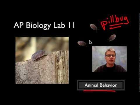 AP Biology Lab 11: Animal Behavior