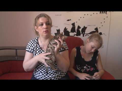 Что такое аллергия на кошачью шерсть?