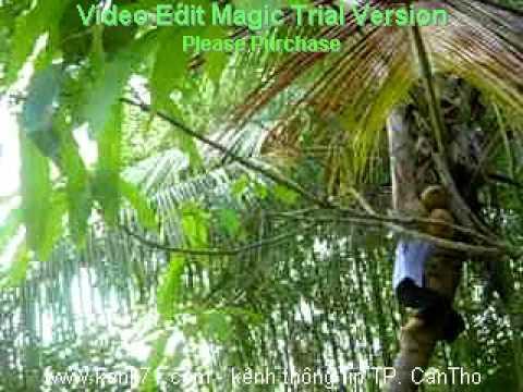 Nu Sinh Can Tho Leo Dua - kenh71.com