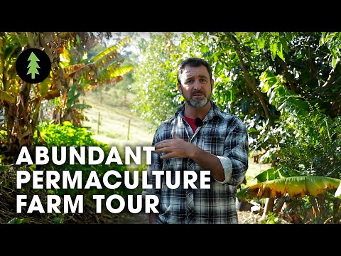 Beautiful 1-Acre Small Scale Permaculture Farm - Limestone P