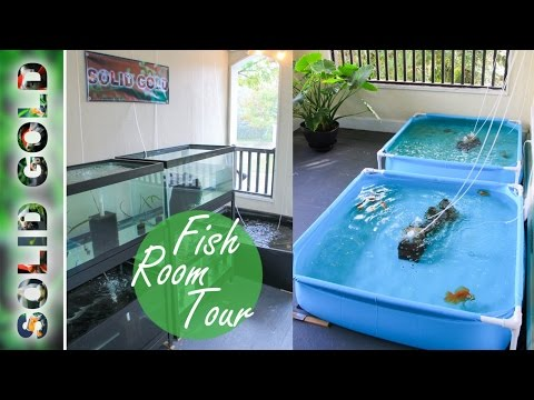Solid Gold Fish Room Tour