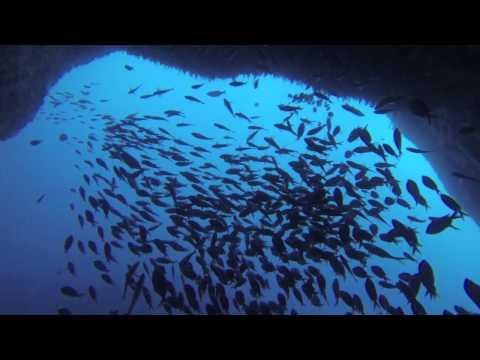 Scuba Diving in Poor Knights Islands, New Zealand.