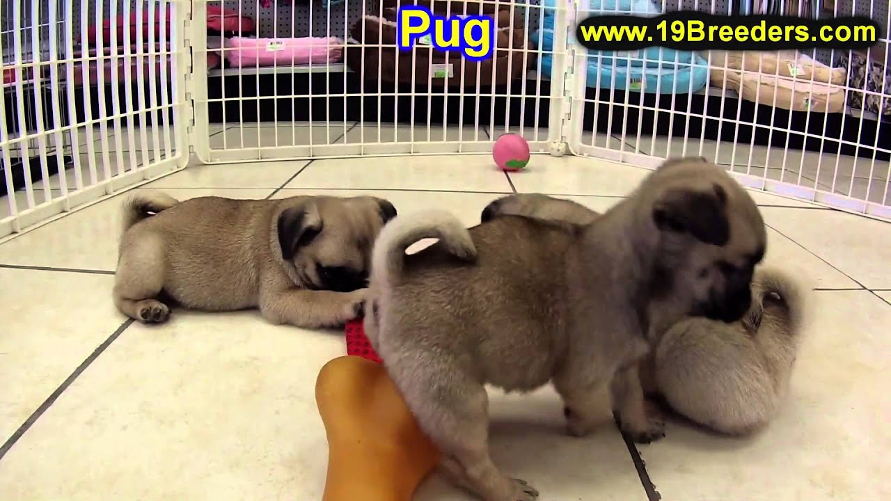 Portland Sale Oregon For In Puppy Symulator Emulator