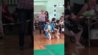 Выставка в г. Вологда, маленькая бигль Джесси победила взрослого Чемпиона! Взяв все титулы!