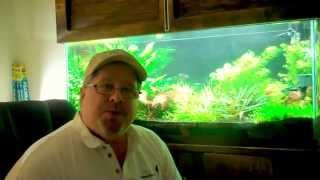 uv in the planted aquarium