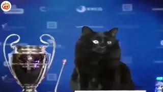 Chú mèo vào sân ghi bàn chưa từng có lịch sử bóng đá