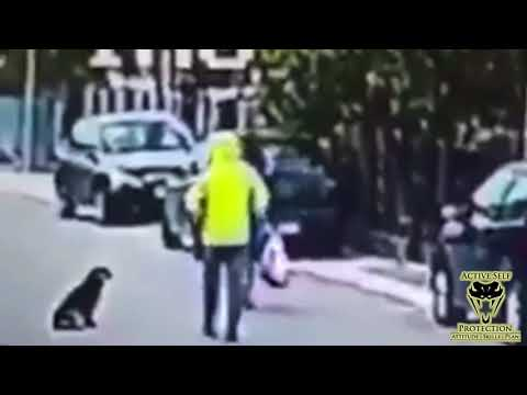 Purse Snatcher Wasn't Expecting Random Stray to Get Him | Active Self Protection