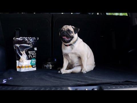 Способы перевозки собак ➠ Ознакомьтесь с советами ветеринара
