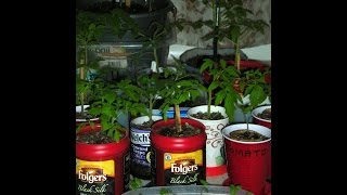 Container Gardening for Beginners   or Anyone