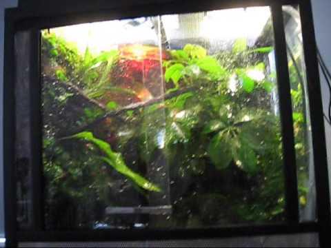 The Red Eyed Tree Frog Vivarium Finished Youtube