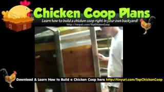 Buying A Chicken Coop (The Chicken Run)