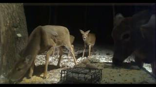 Deer Trail Pictures From (12-10-16)