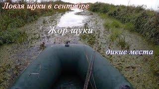 видео Ловля щуки в сентябре