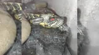 Мои черепахи. Прикол и рассказ
