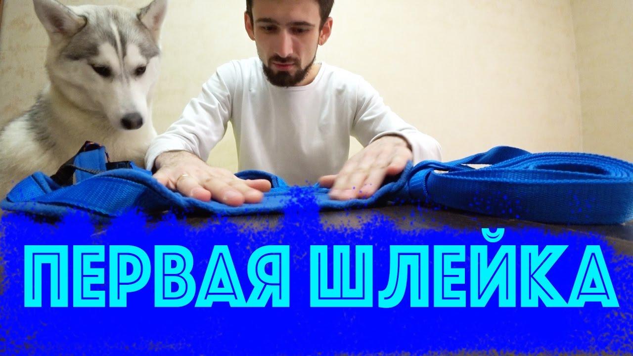ЖИВОДЕРЫ ПРИКОВАЛИ ОВЧАРКУ К ЗАБОРУ - YouTube