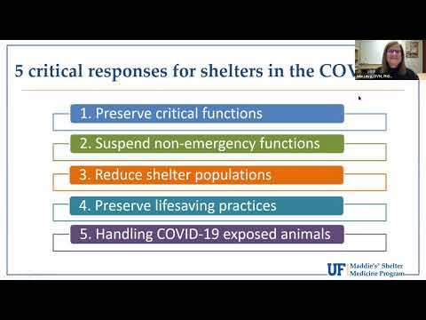 An Emergency Contraceptive Option For Cats During COVID-19 Delayed Surgery - Webcast