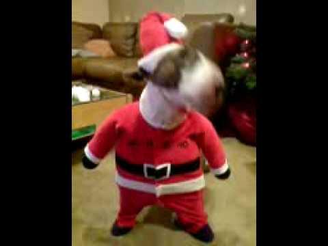 Santa Posing As A Bull Terrier YouTube