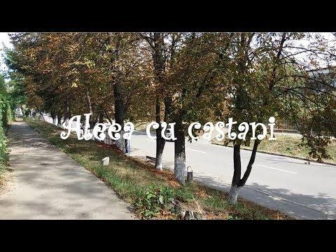 Aleea Cu Castani.