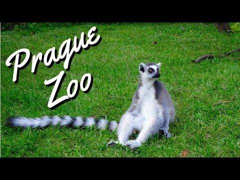 Prague Zoo | Zoo Praha  - Best of Europe