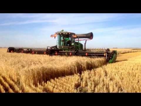 W150 John Deere swather (Macdon) cutting heavy crop of soft white spring wheat.