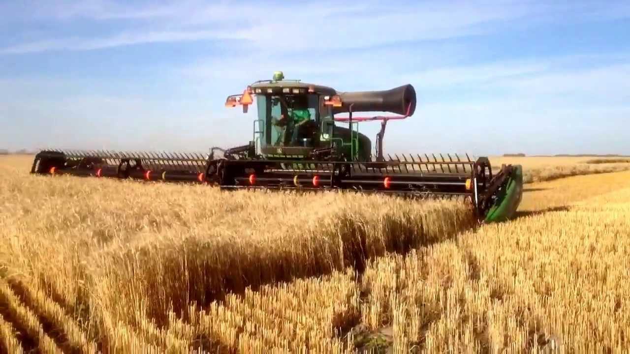 W150 John Deere swather (Macdon) cutting heavy crop of soft white spring  wheat