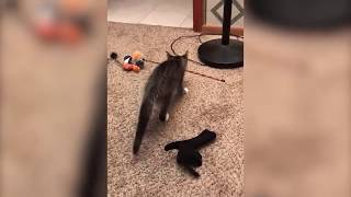 Funniest Moment  When Cat Scared   Funny Cat Video