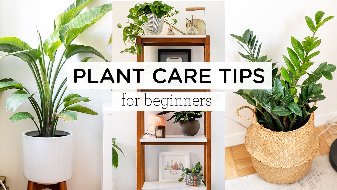 PLANT CARE TIPS FOR BEGINNERS,  indoor plant tour