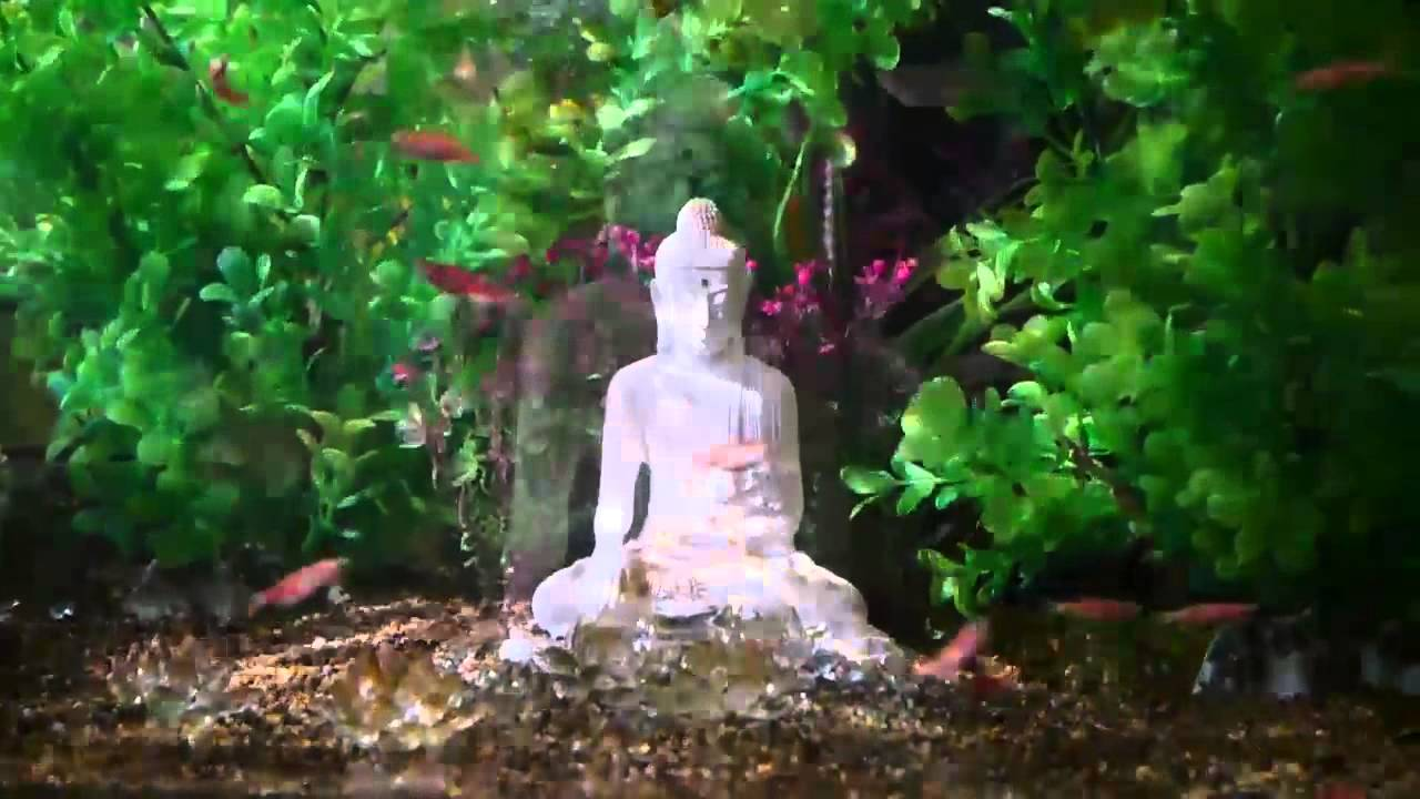 Magical fish tank with buddha statue youtube for Buddha fish tank