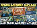 Bikin Nangis Harga Lovebird Terbaru Tahun  Surabaya  Mp3 - Mp4 Download