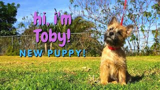 Bringing Our New Puppy Home | Toby the Cairn Terrier Puppy