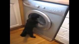 طرائف قطط ضحك
